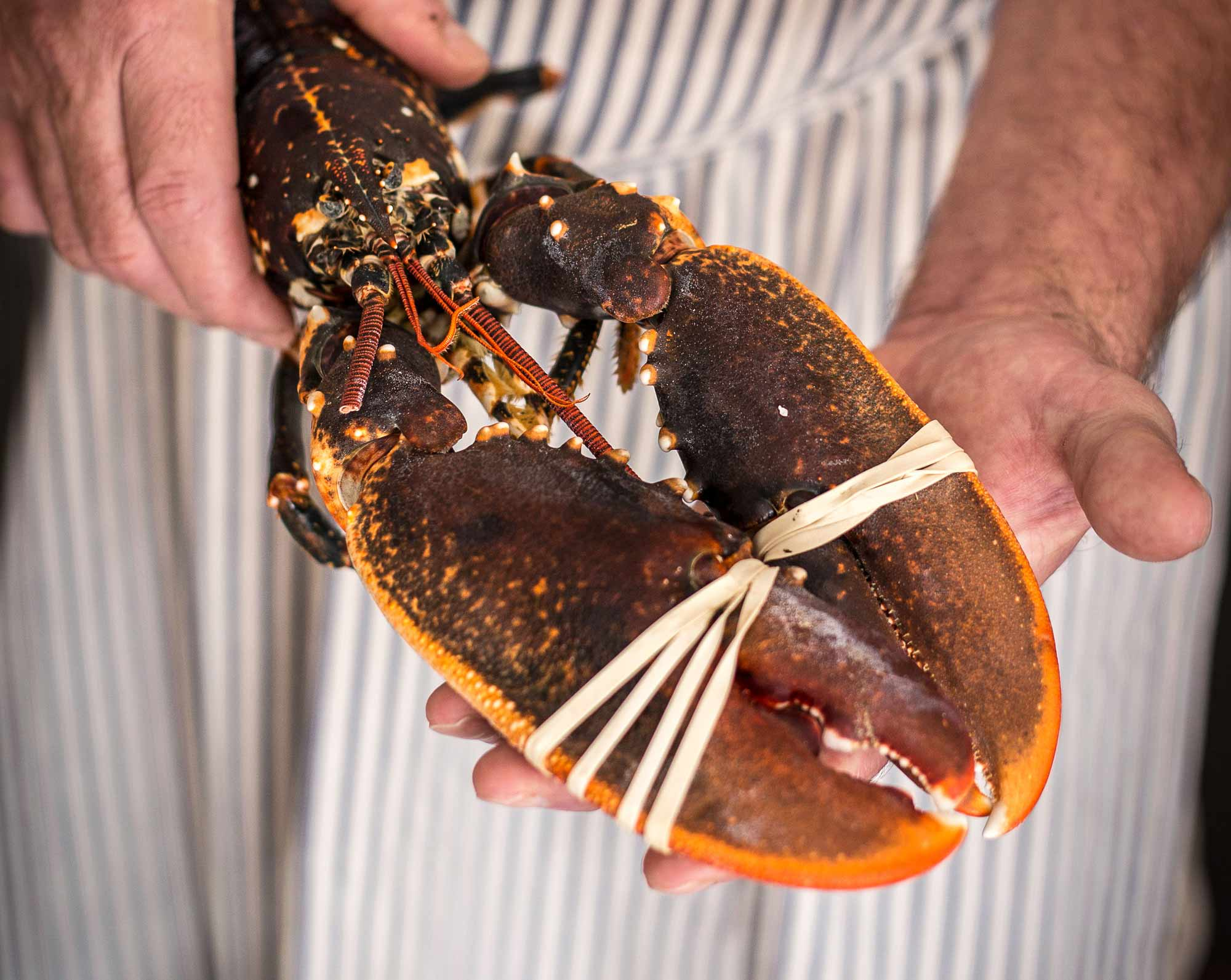 Cornish lobster for catered events